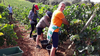 Wine tour to Ronda