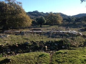 A herd of Grazalema merino sheep walking in the countryside