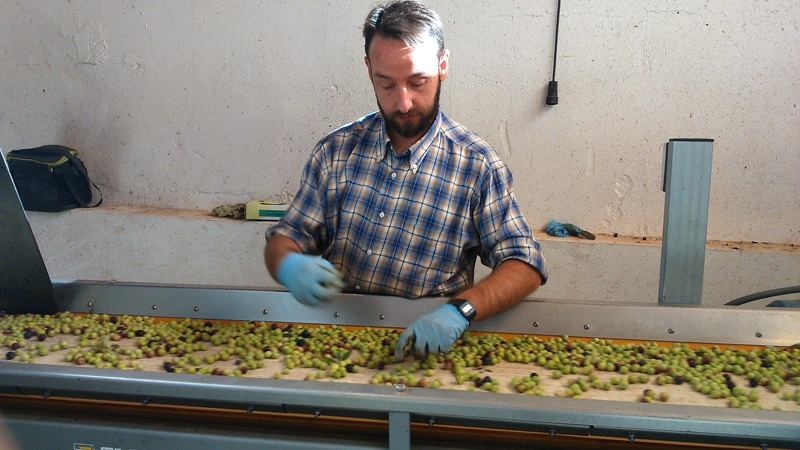 Olive oil sorting table