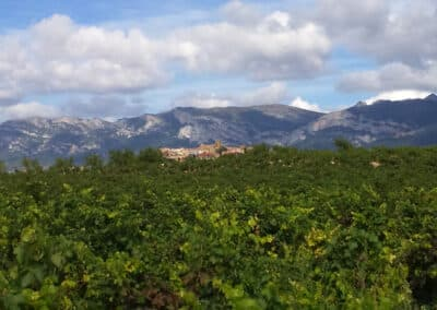 A view of Laguardia from a vineyard with the Sierra Cantabria in the background during our customised tours