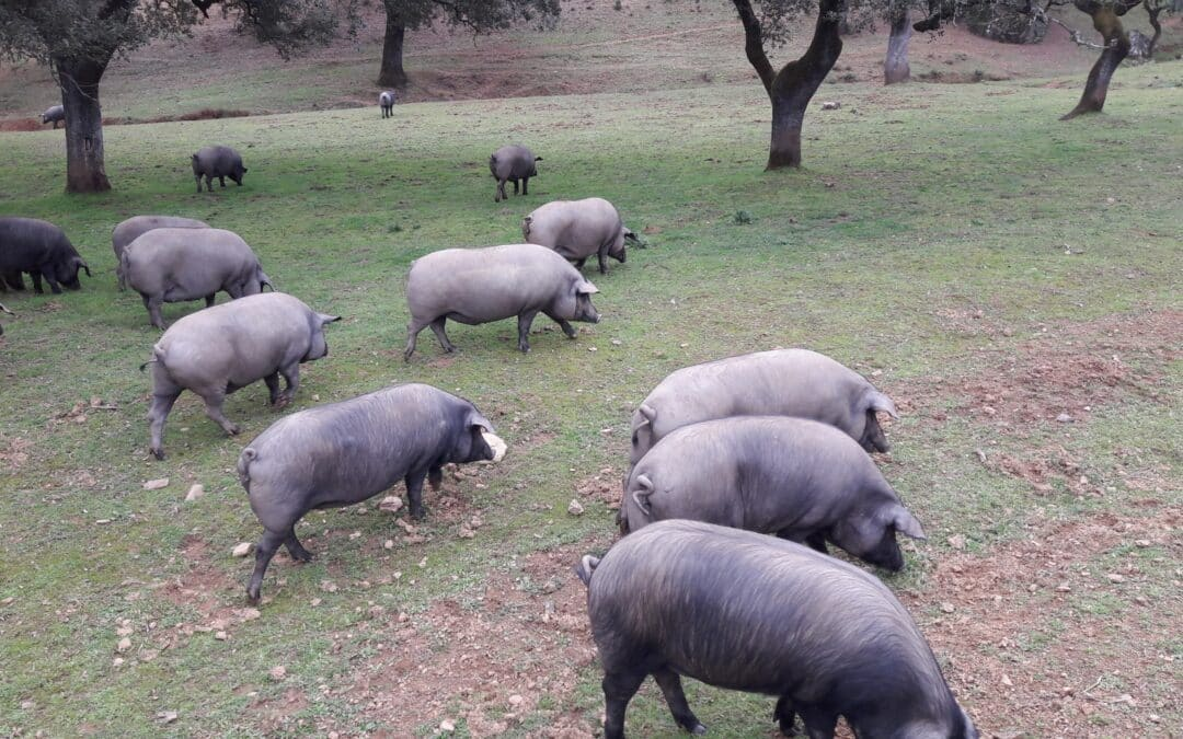 Iberico Ham Tour